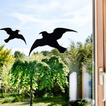 Vögel & Tauben